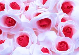Piękne róże piankowe biało - czerwone - 10szt. kreatywne